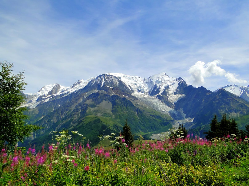 103182  mont-blanc-alps-mont-blanc-the-alps-mountains-meadow-flowers-nature p