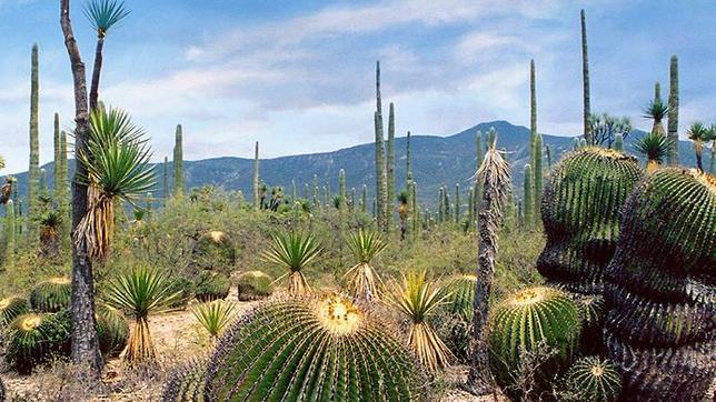 Cactus--644x362